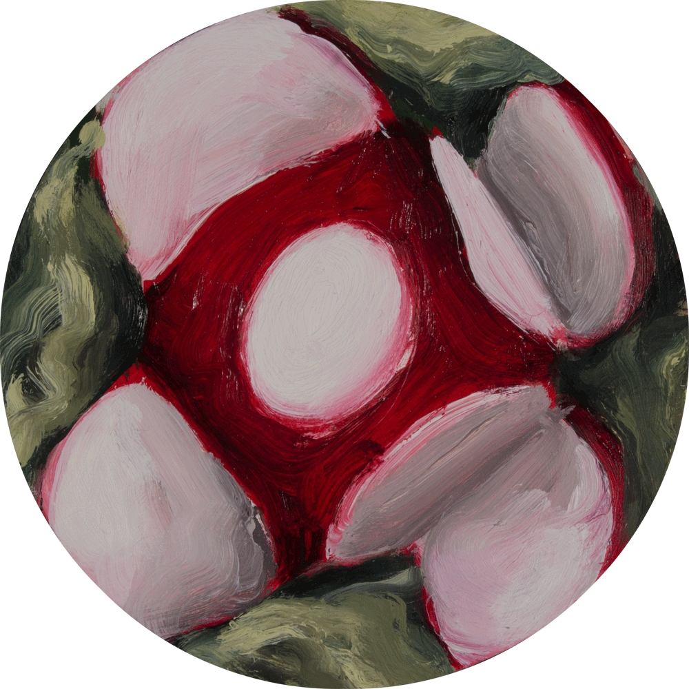 painting of a radish
